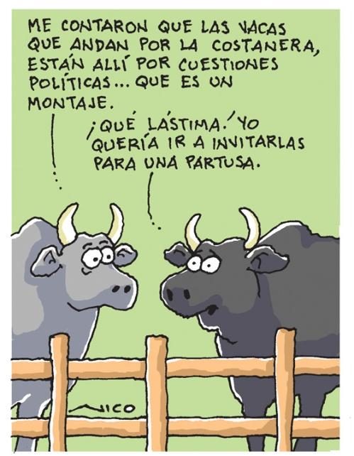 vacas sueltas