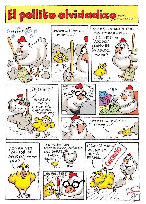 El pollito olvidadizo